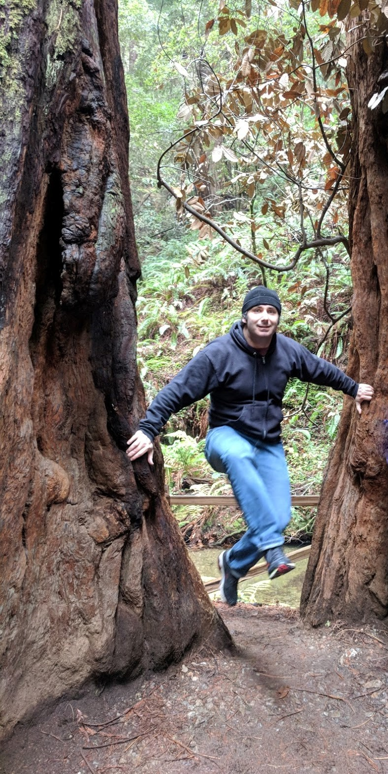 Journey_MuirWoods_Leap_Dec2018.jpg